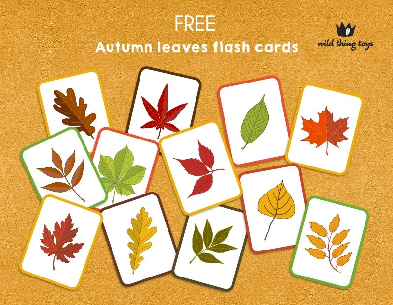 autumn-leaves-flash-cards-display